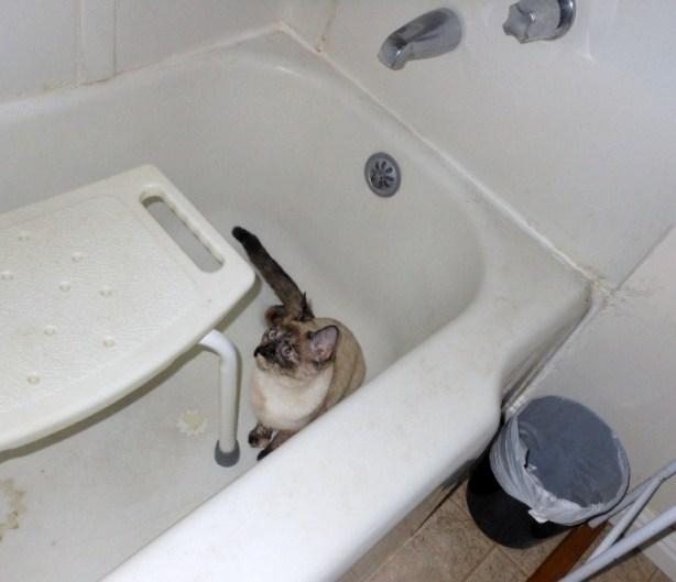 bath leelu